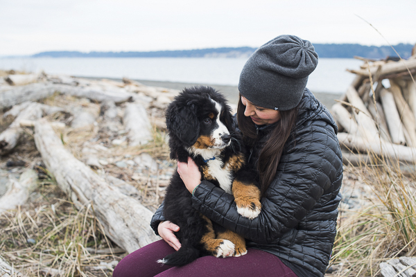 BMD puppy sitting in woman's lap, beach dog photos