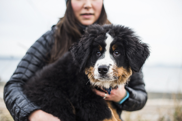 adorable Berner puppy on beach, lifestyle dog photography