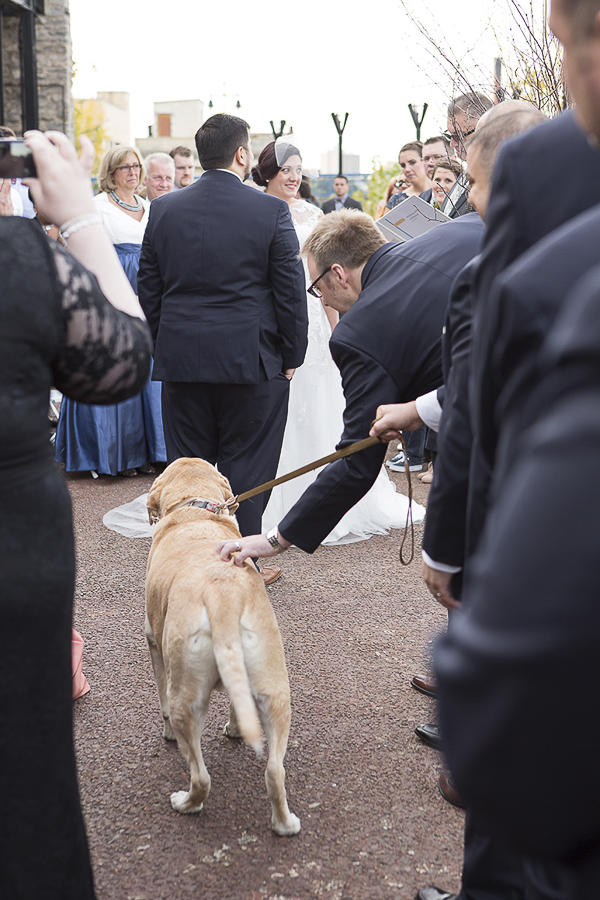 Yellow lab in wedding