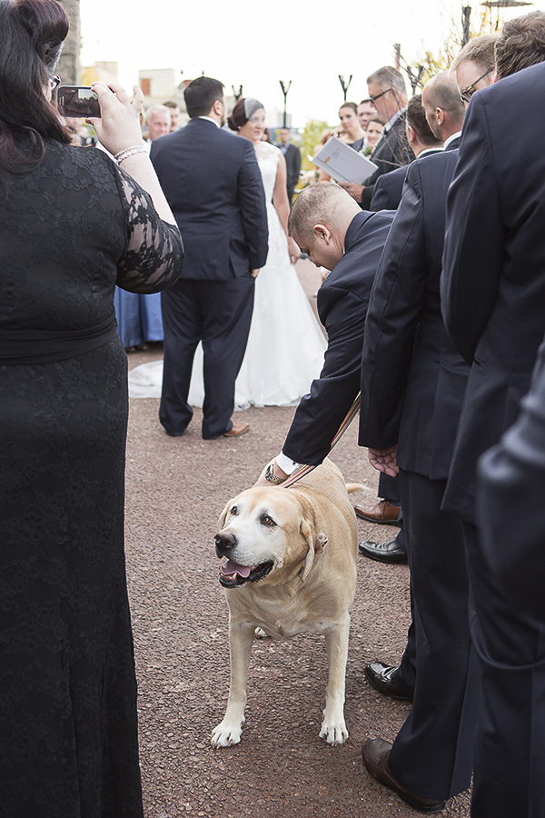 smiling Yellow Labrador Retriever during wedding