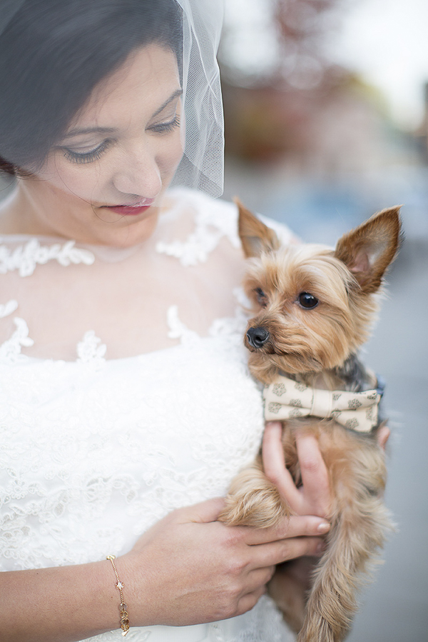 bride holding Yorkie wearing bow tie, wedding dog