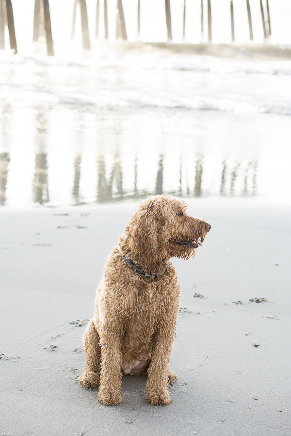 handsome dog sitting on beach
