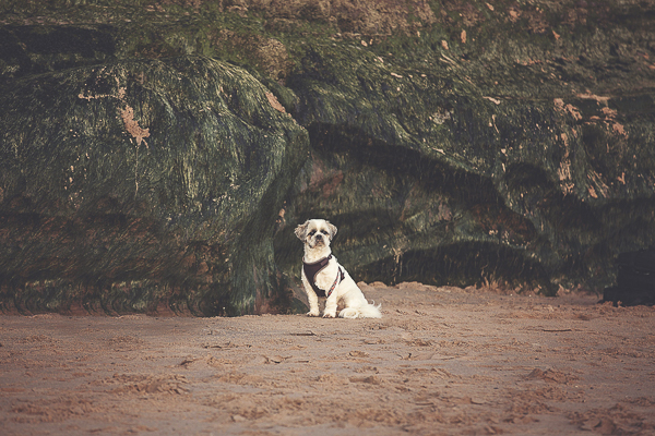 dog on Jurassic coast