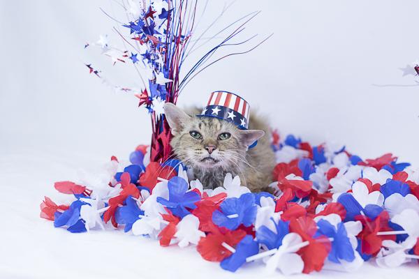 adoptable senior cat in GGCHS
