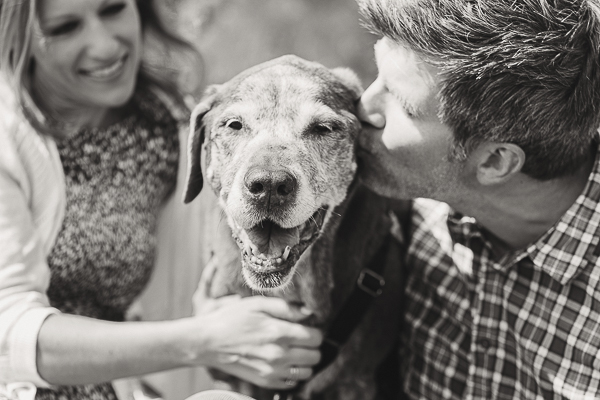 man kissing senior dog, Chocolate Labrador Retriever mix