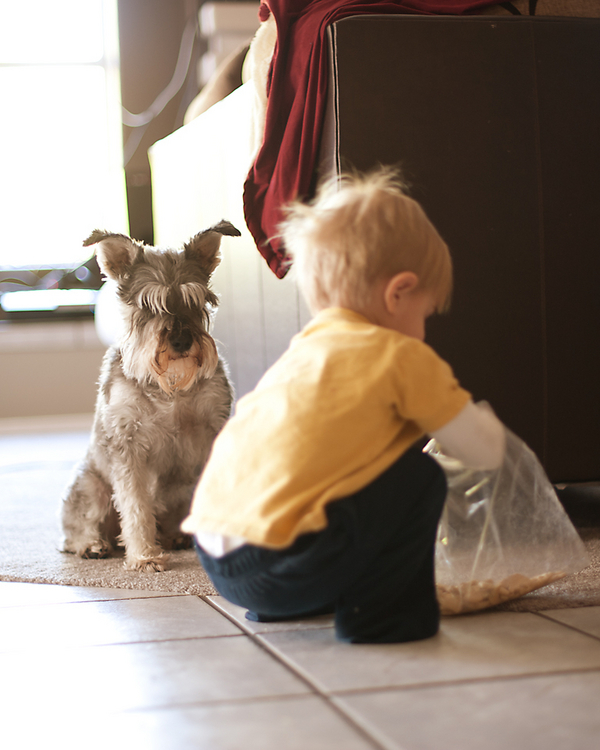 toddler boy sneaking snack with dog