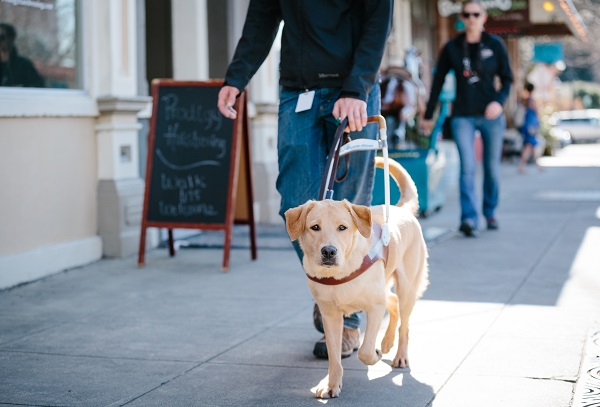 man walking with guide dog for the blind