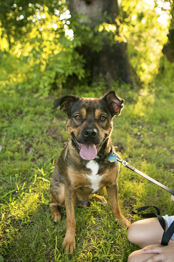 adorable two year old Rottweiler mix looking for new home