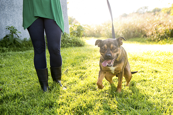 adoptable dog running on leash, fostering saves lives