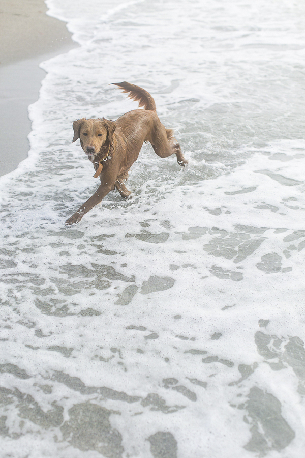 dog running on sandy beach