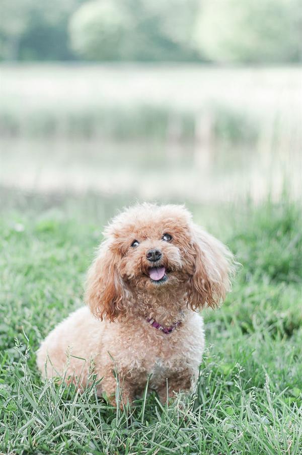 senior dog with diabetes living good life, beautiful dog portraits