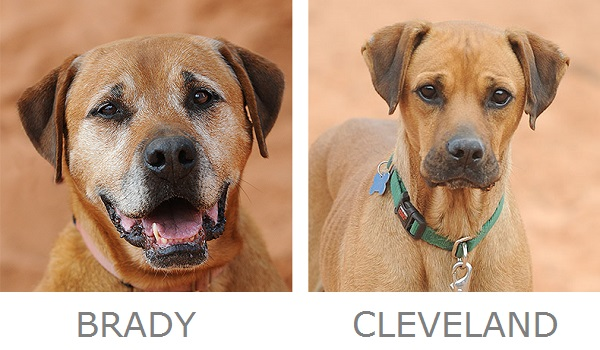adoptable dogs from Best Friends Animal Sanctuary, National Mutt Day