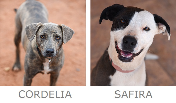 adoptable dogs from Best Friends Animal Sanctuary