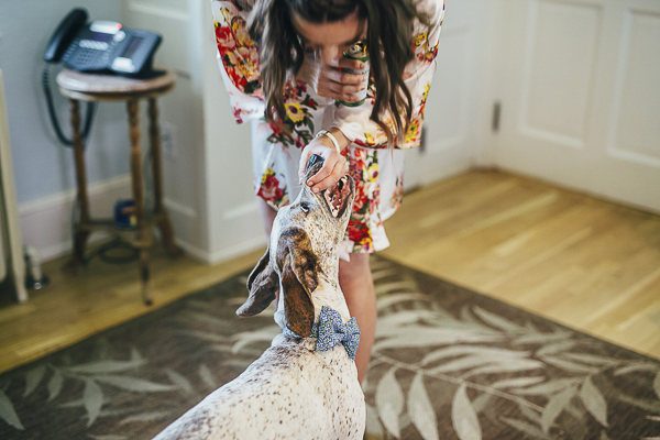bride giving treat to Pointer mix, wedding portraits