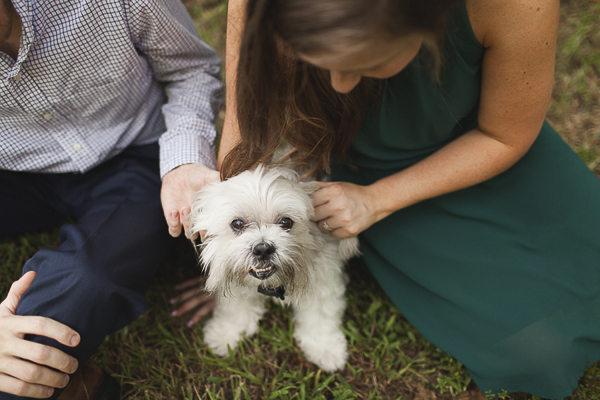 little white dog looking up, on location dog/engagement photos
