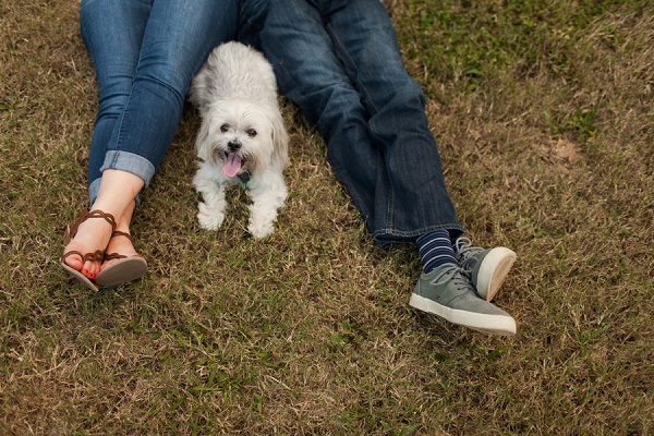 dogs in engagement session ideas, Shih Tzu Pekingese mixed breed lying on grass with his people