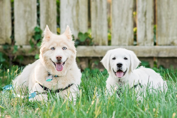 Happy Tails:  Caymus and Bailey Blue