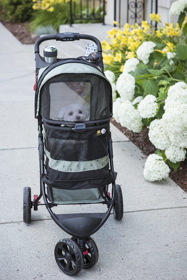 small dog in pet stroller, Pet Gear no zip jogger special