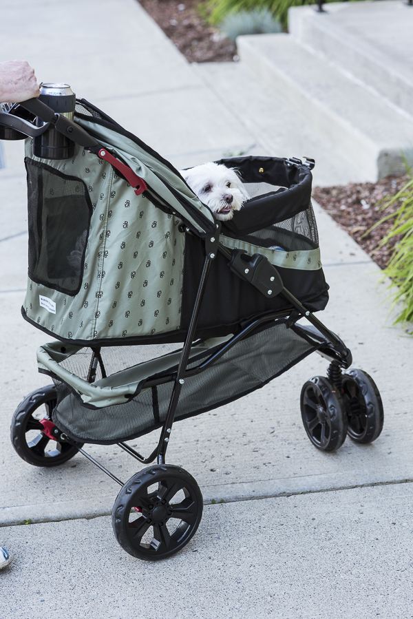 Stroller review, benefits of strollers for healthy dogs