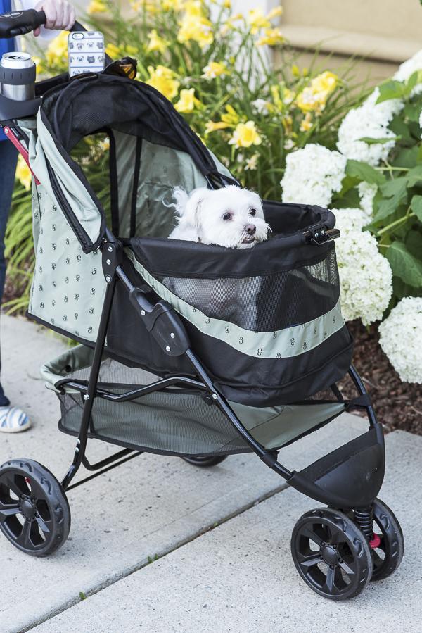 little dog in stroller, dog-friendly shopping tips