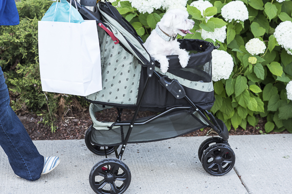 Is A Pet Stroller Right for Your Dog?