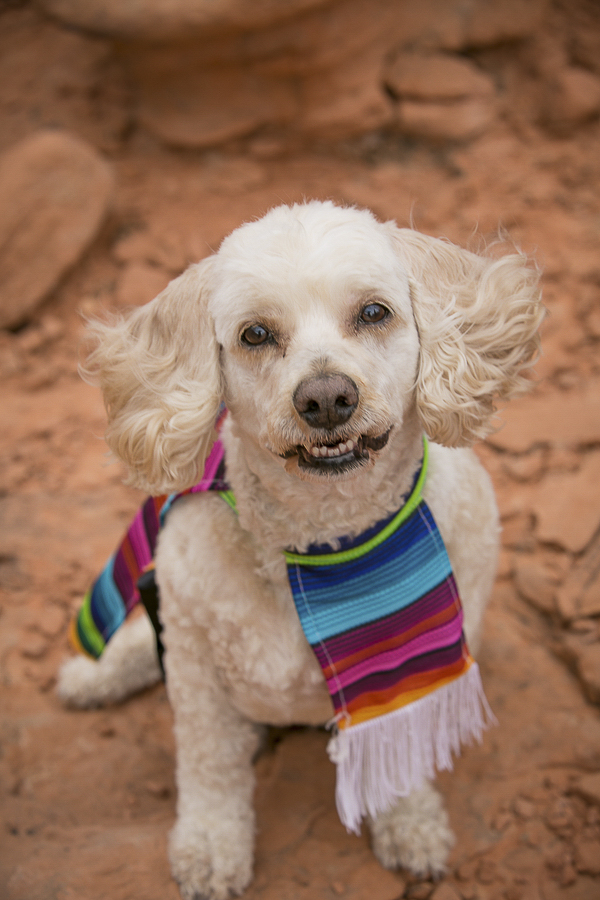cute dog wearing poncho in desert