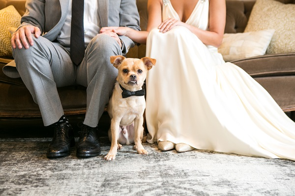 Pekingese mix wearing black bow tie sitting between bride and groom