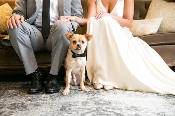 Pekingese mix wearing black bow tie sitting between bride and groom