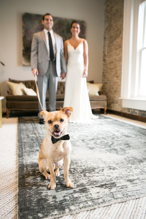 bride, groom, wedding dog , smiling dog in black bow tie