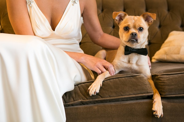 cute dog in bow tie with bride