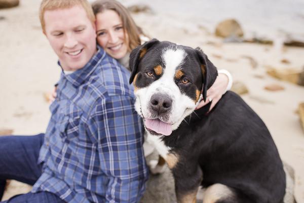 goofy Swiss Mountain Dog and couple on beach
