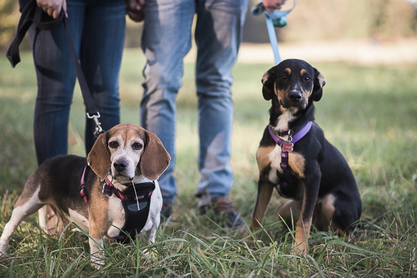 Engaging Tails: Chloe and Bailey