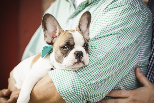 French Bulldog puppy resting in man's arms, engagement photos with dogs