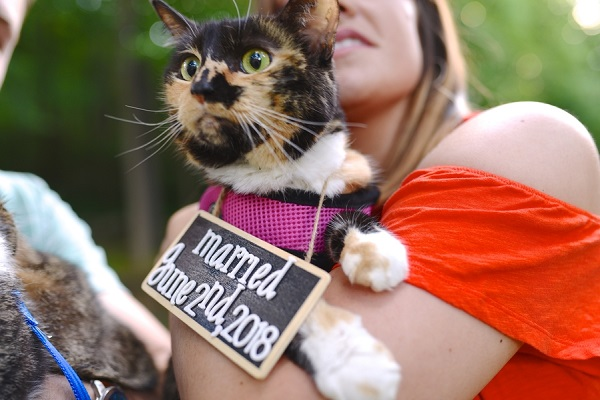 calico cat wearing saving the date sign