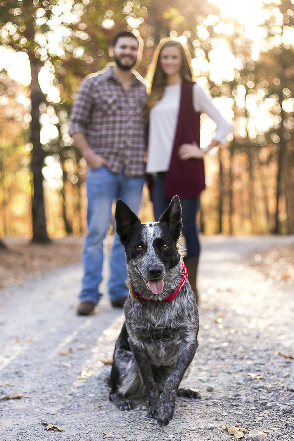 dog standing in front of couple, creative pet photography