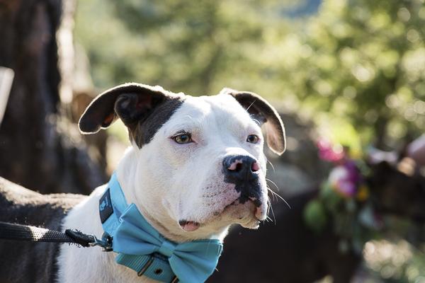 handsome wedding dog