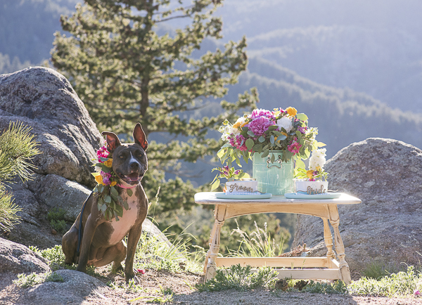 brown pittie in floral wreath, wedding dog