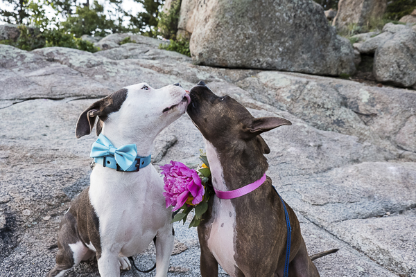 Best Dogs:  Leia and Luke – A Dog Elopement