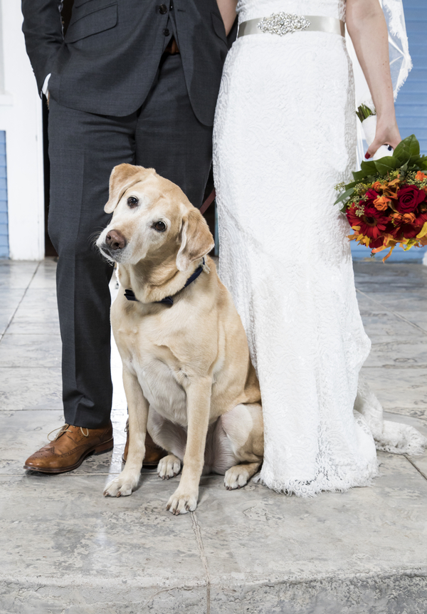 Yelllow Lab, bride and groom, best wedding dog