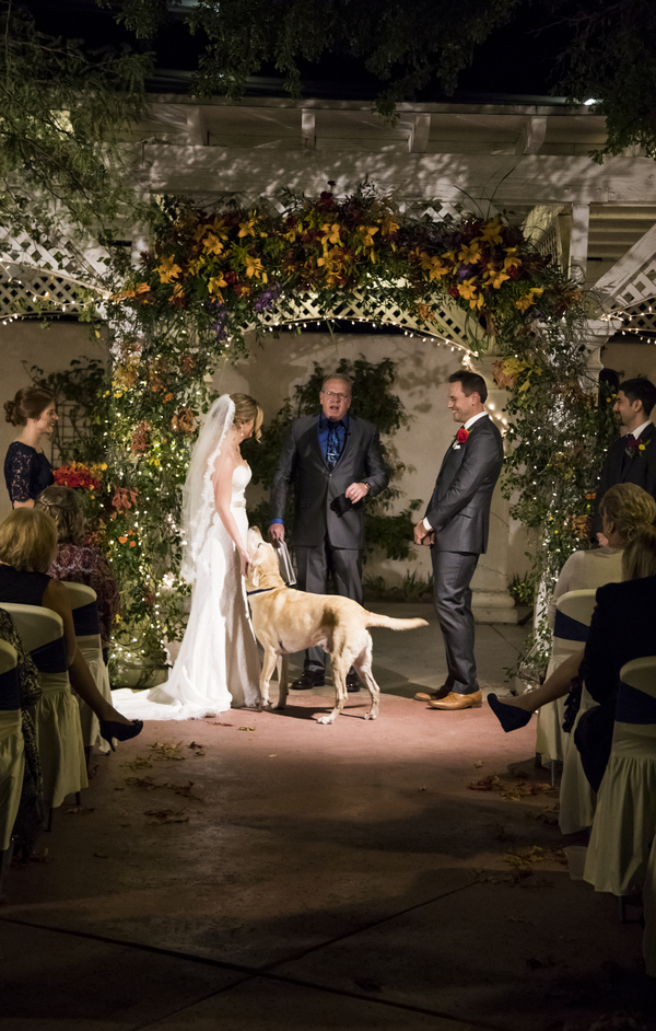 dog trying to play fetch during wedding, wedding dog, Yellow Labrador Retriever