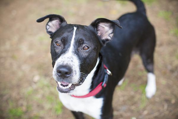 adoptable dog, Humane Society Union County, NC