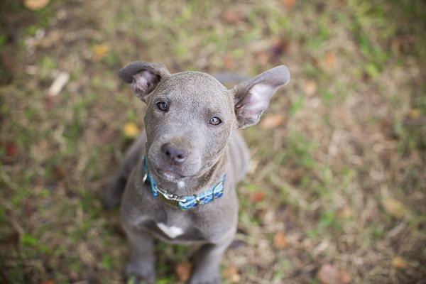 Adopt Me:  Humane Society of Union County, NC