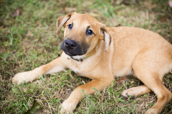adoptable puppy, Humane Society Union County, NC