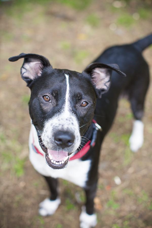 Adopt Me Humane Society Of Union County Nc Daily Dog Tag