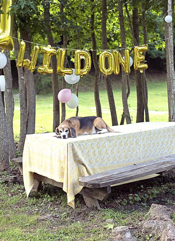 Senior dog chilling on picnic table,