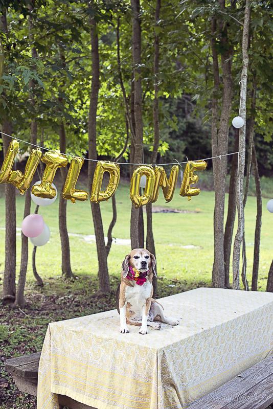 senior dog sitting on picnic table, dog birthday party