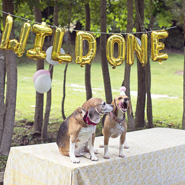 Beagles, dog party, Wild One