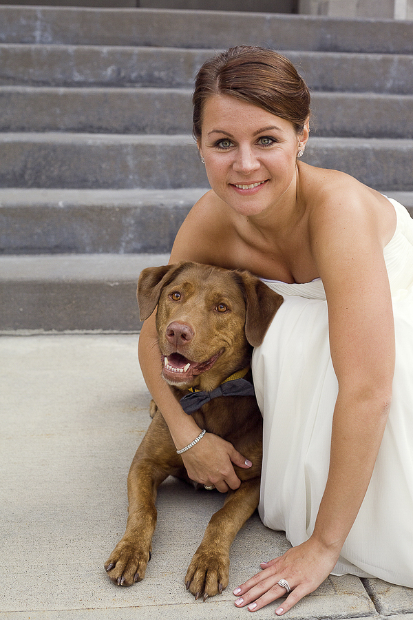bride hugging Retriever mix, wedding dog