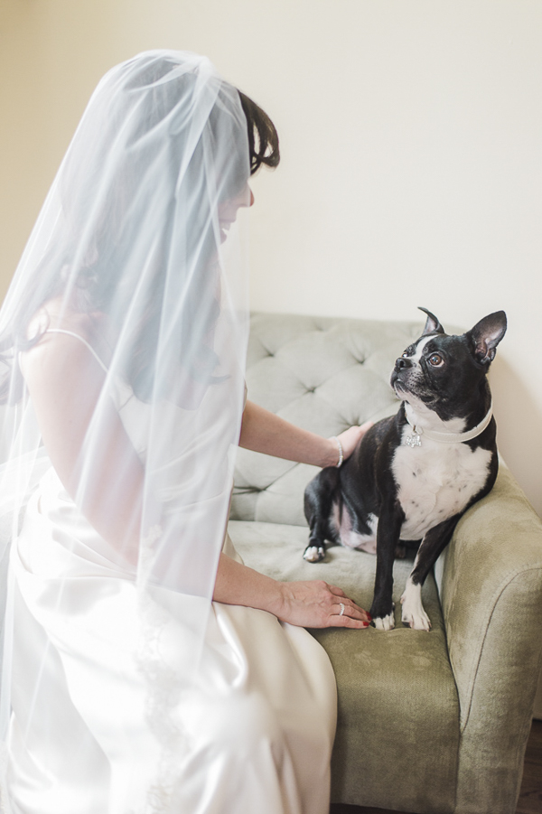 Boston Terrier looking up at bride, wedding pictures with dog