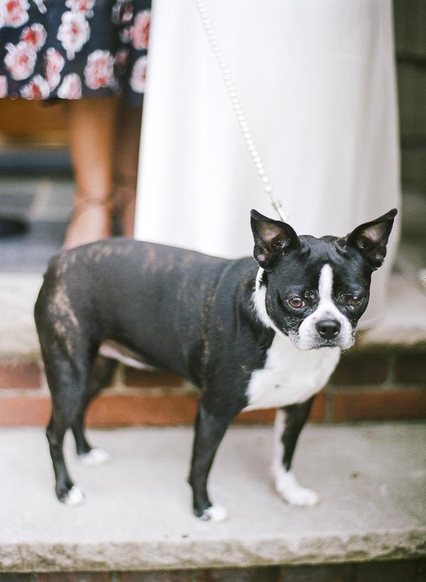 Best (Wedding) Dog:  Roxy the Boston Terrier